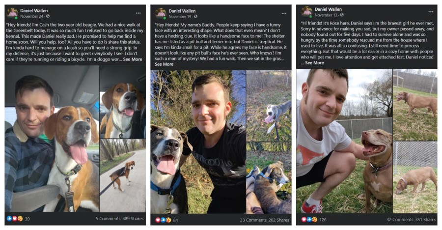 Three shelter dog status which reached 200, 300, and 400 shares on Daniel Wallen's Facebook